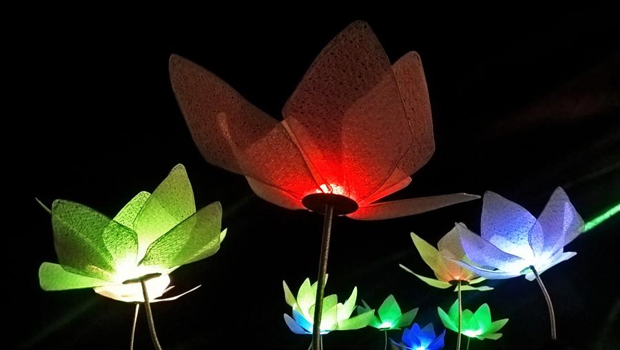 Πολύχρωμα διακοσμητικά λουλούδια με φώς